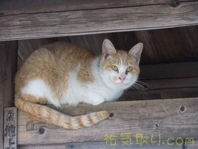 唐沢山神社4