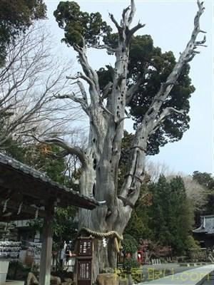白濱神社20