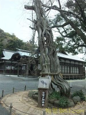 白濱神社30