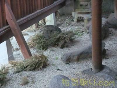 雀のお宿磯部館12