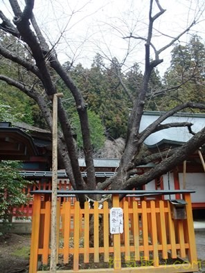 金櫻神社17
