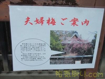 甲斐國一宮浅間神社36