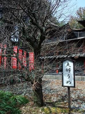 北口本宮浅間神社66