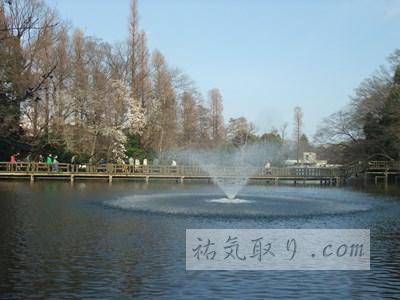 井の頭公園12