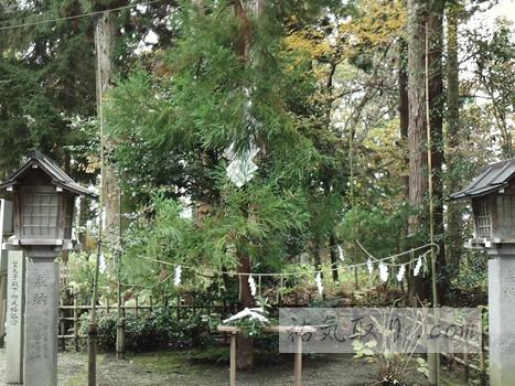 isasumi-jinja101