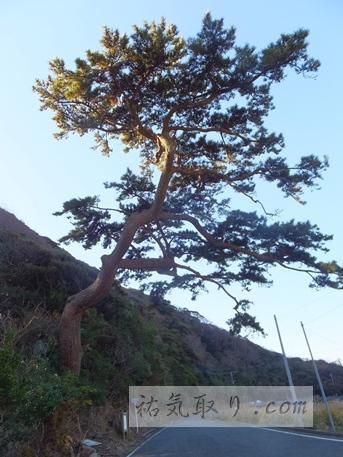 対馬海神神社5