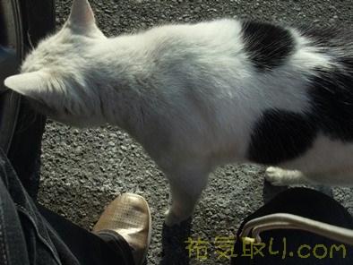 唐沢山神社69