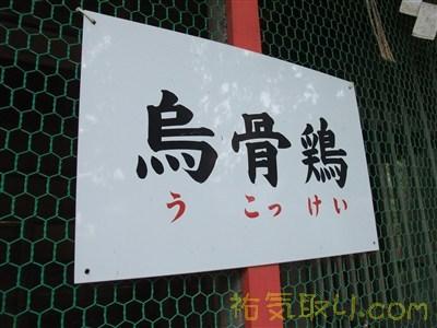 白濱神社35