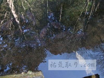 赤城神社(三夜沢町)14