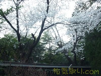 甲斐國一宮浅間神社22