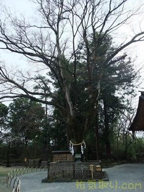 武田神社46