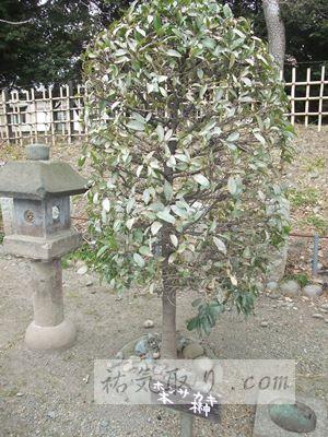 正一位稲荷神社6