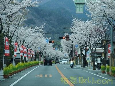 武田神社5