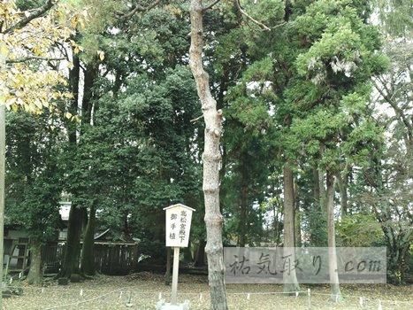 isasumi-jinja27