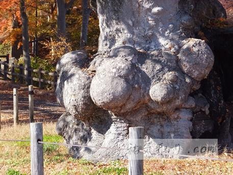 馬場都々古和氣神社73