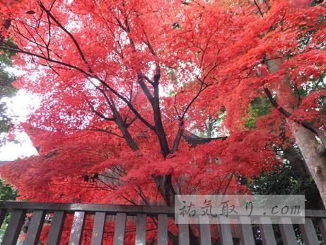 天津神社47