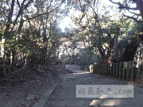 対馬海神神社22