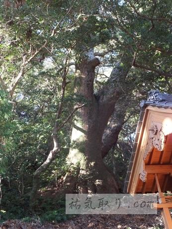 対馬八幡神社47