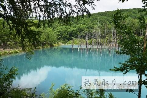 美瑛青い池